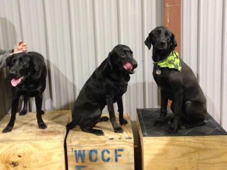 WOD Dogs